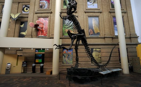 5: Denver Museum of Nature and