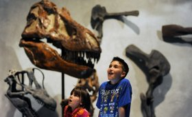 The Denver Museum of Nature & research, among Colorado's preferred family attractions