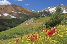Vibrant wildflowers herald the arrival of summer in Colorado's hills.