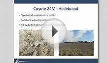 Coyote Ecology: Findings from the Denver Metro Area